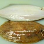 Jūrų liežuvis. Kaip išdarinėti žuvį